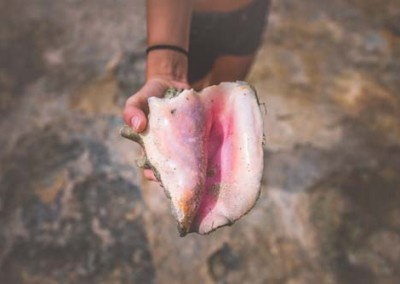 Free Travel images of Girl Holding Large Sea Shell At The Beach