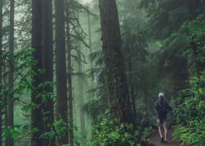 Man Walking Through Green Forest With Mist